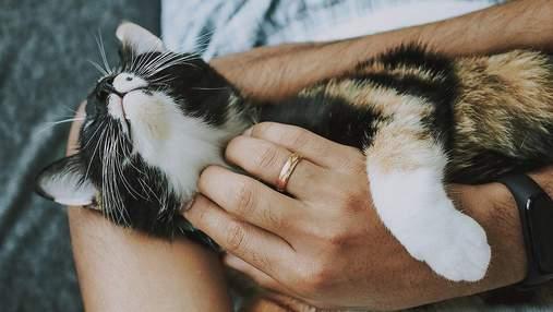 """Хай усе буде """"мяу"""": картинки-привітання з Міжнародним днем кішок 2021"""