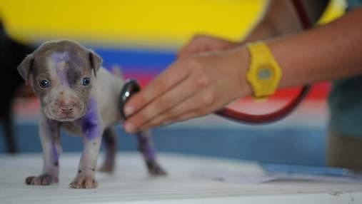 Зі святом: картинки-привітання з Днем працівника ветеринарної медицини