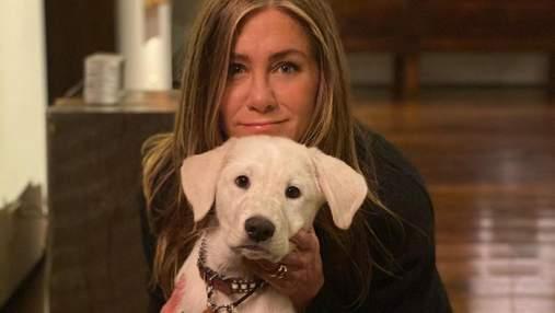 Пока другие покупают, они дают второй шанс: знаменитости, принявшие в семьи бездомных животных
