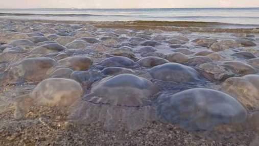 Сморід і печаль: у Кирилівці медузи продовжують псувати відпочинок – промовисте відео