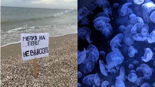 В курортной Кирилловке туристам запретили выносить медуз на берег: с чем это связано