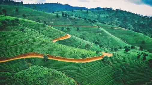 Шрі-Ланка видаватиме візи для фрілансерів: скільки коштуватиме документ