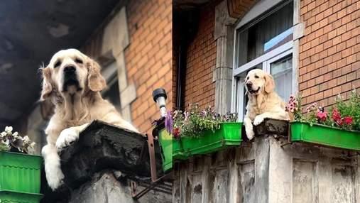 """З Google зникла найпопулярніша локація Польщі """"милий пес на балконі"""""""