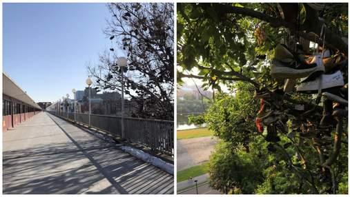 Студенти Університету Міннесоти закидують своє взуття на дерево – і ніхто не знає, чому