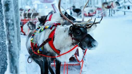 В Лапландию на Новый год: Windrose анонсировала рейсы из Киева