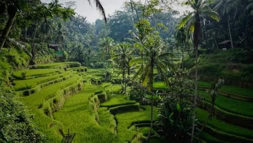 """Откроется только для богатых: остров Бали намерен запретить въезд """"бюджетным"""" туристам"""
