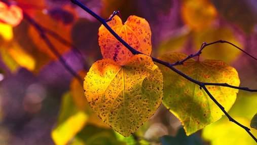 20 жовтня – яке сьогодні свято і що не можна робити в цей день